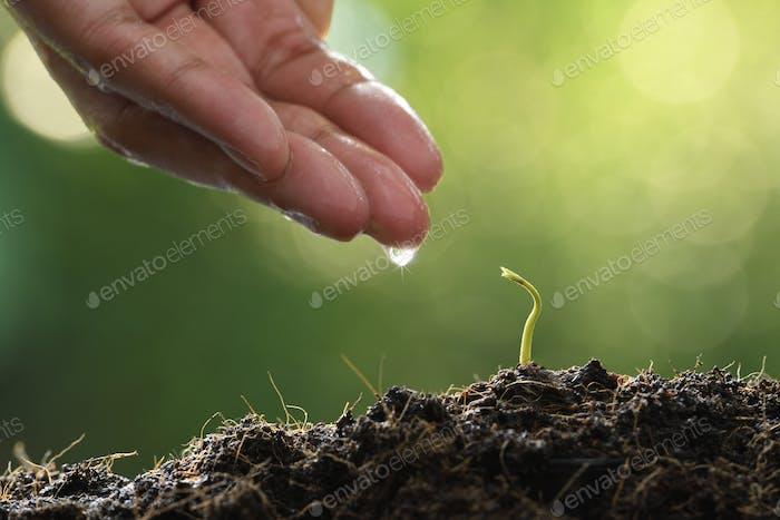 ััYoung plant