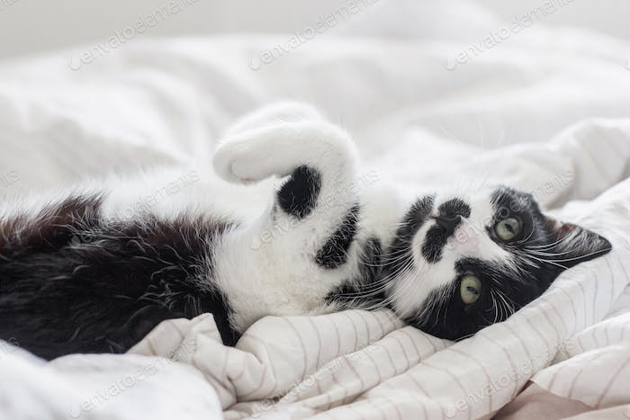 Adorable cat with funny emotion lying on bed in stylish sheets in morning light