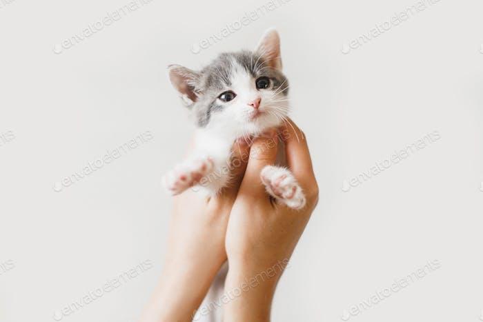 Adorable little kitten in hands on white background