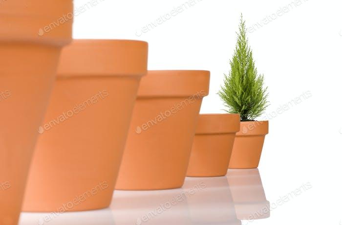 flowerpot in a row