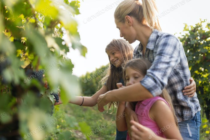 Wine grower family in vineyard before harvesting