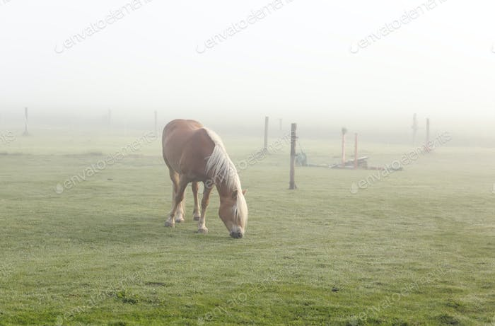 Pferd weiden auf Weide im Nebel