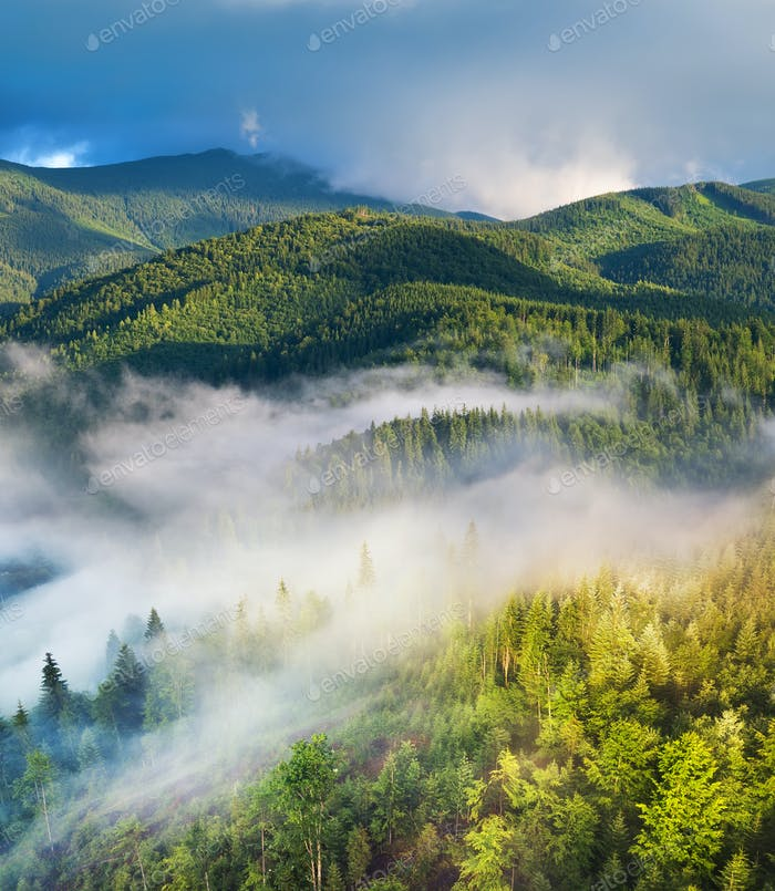 Forest and fog in the mountains. Summer landscape with a drone. A mountain valley.
