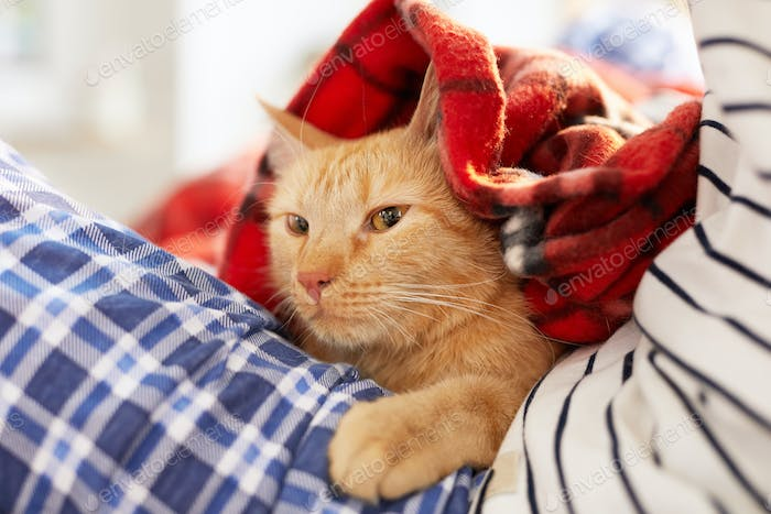 Ginger Cat Wrapped in Cozy Blanket