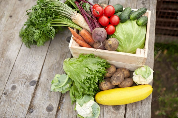 close up of vegetables on farm