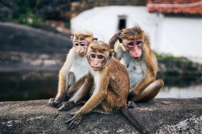 Group of cute monkeys