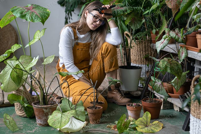 Tired woman gardener takes a break from work, sitting, pruning dry withered caladium plant. Hobby.