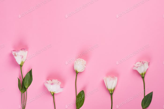 Pink eustoma flowers on a pink background with copy space. Flat lay style