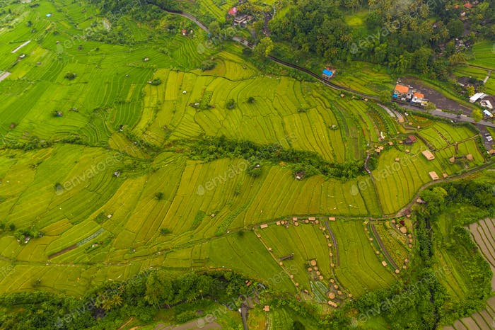 Aerial view of lush green paddy with rural farms in Bali, Indonesia rice Terrace rice on hill