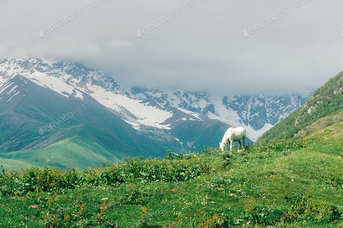 White horse in high mountains