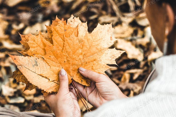 Woman's hand holding bunch of colorful leaves. Beautiful fall season, walking in the park