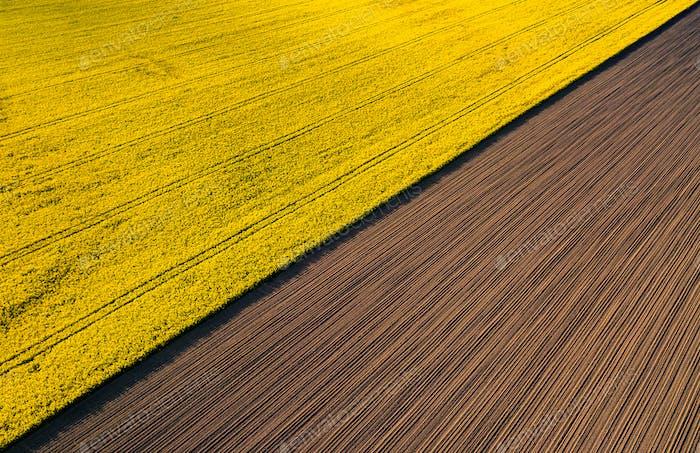 Drohne ansicht über gelben Rübungsfeldern, Landwirtschaftskonzept aus Drohne perspektive