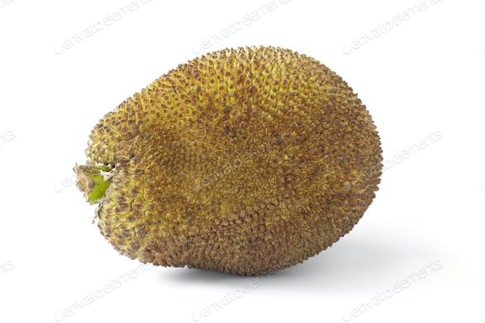 Ganze Jackfrucht
