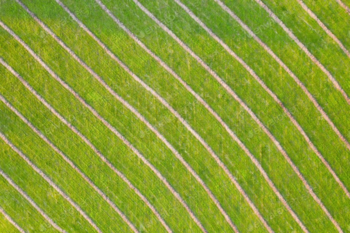 Green natural background with diagonal structure from aerial perspective