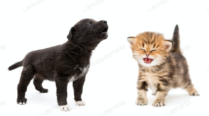 Crying kitten and puppy