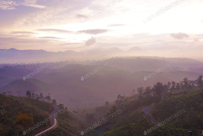 Misty mountain with tea plantation
