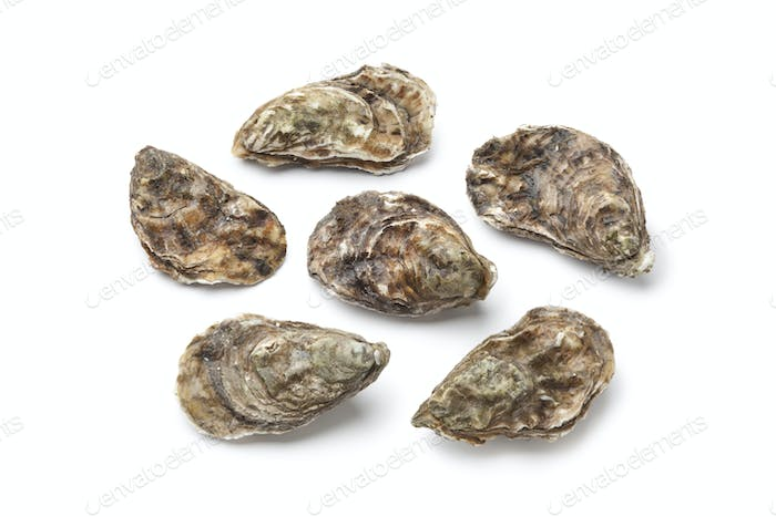 Whole fresh raw oysters