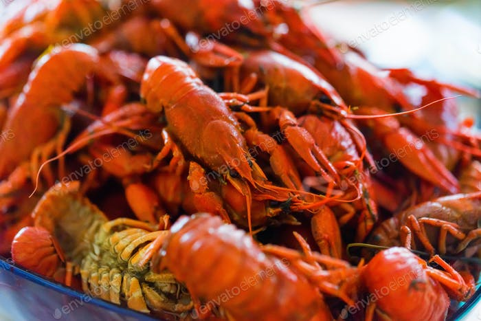 Tasty red boiled crayfish close up background