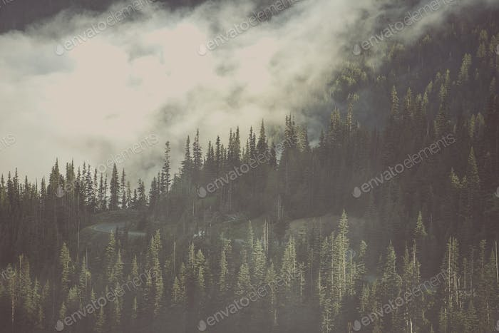 Foggy Wilderness Forest