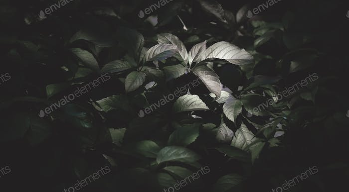 Dark green mysterious natural background with leaves, outdoor nature, soft focus, pattern