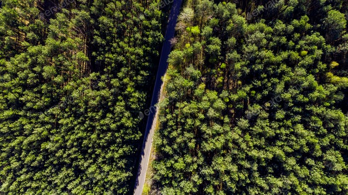Aerial Drone View Over Forest at Spring