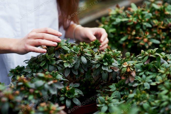 Detailliertes Foto von Frauenhänden, die die Pflanzen in einem Topf berühren