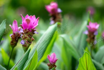 Beauty in nature. Macro photo of flowers in the jungle.