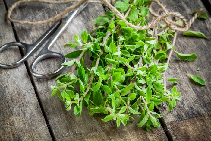 bunch of raw green herb marjoram with scissors on a wooden table