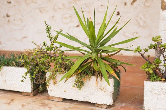 Grüne Topfpflanzen in schönen Topf im Freien