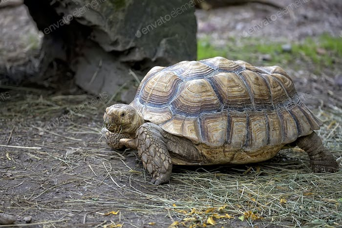 Turtle in the wild