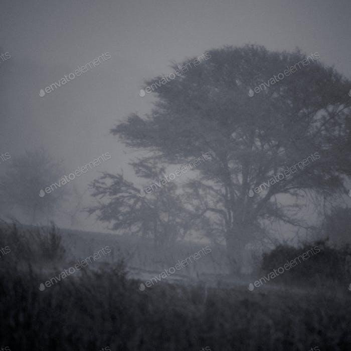 Schwarz-weiß-afrikanische Landschaft im Regen, Tansania, Afrika