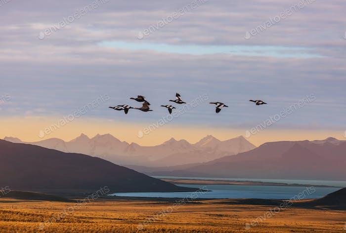 Vögel in Patagonien
