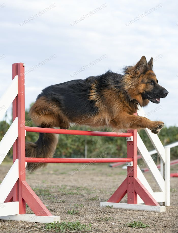 training of agility