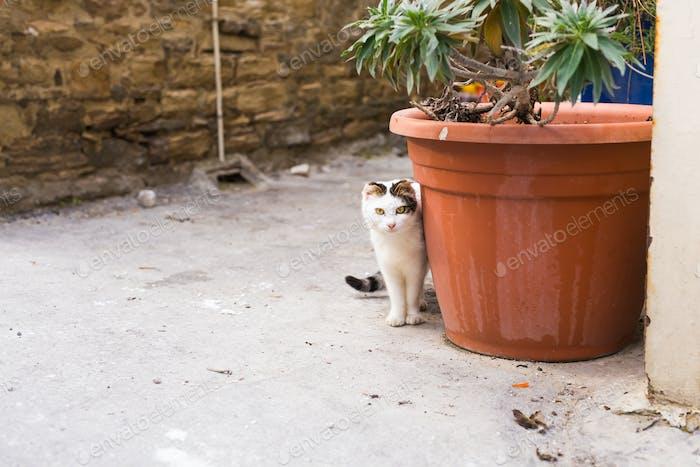 Konzept der obdachlosen Tiere - Streunende niedliche Katze auf der Straße