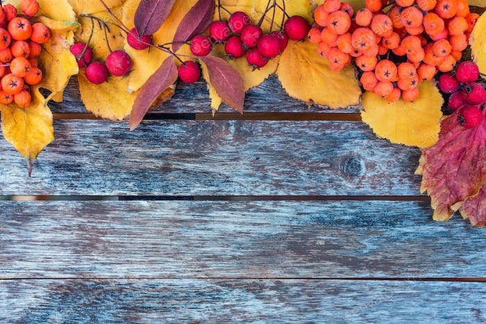 Thematic autumn flatlay background. Wooden planks, red leaves and berries