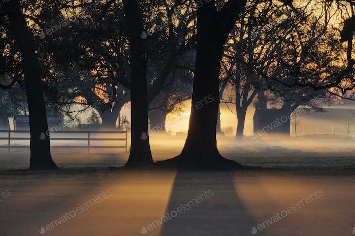 51375,Trees in the Morning Mist