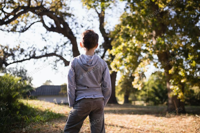 Rear view of little boy standing in forest