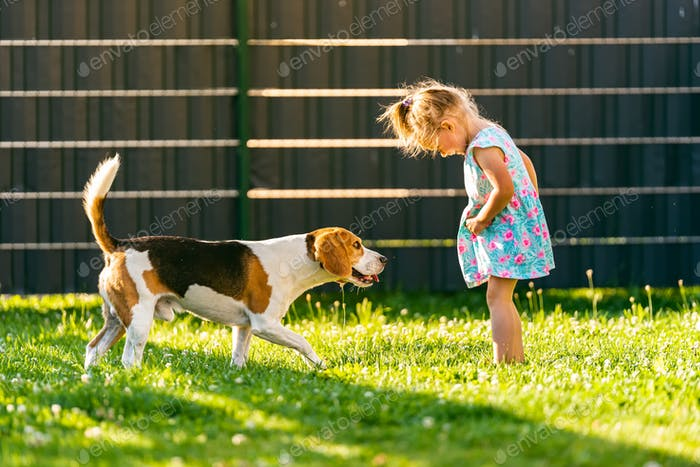 Baby girl standing with beagle dog in backyard in summer day. Domestic animal with children concept