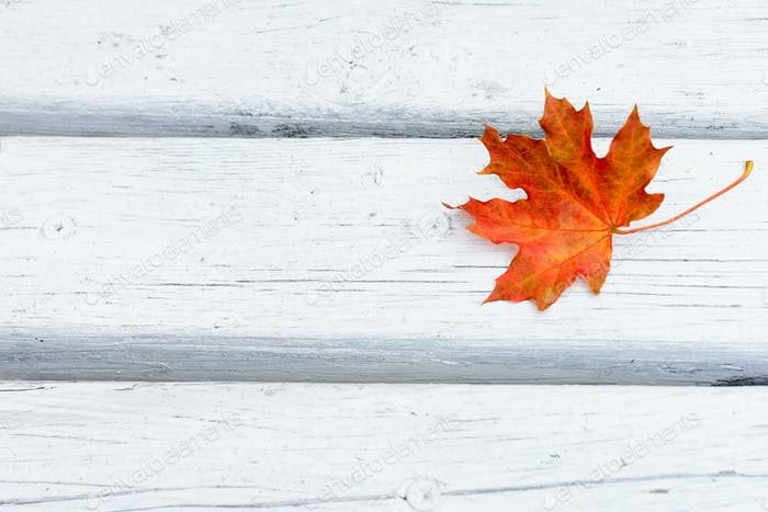Fall maple red leaf on white wooden background