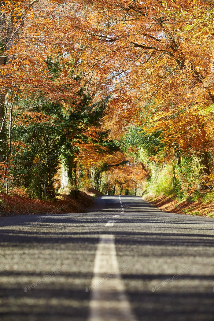 Country Road Through Autumn Woodland