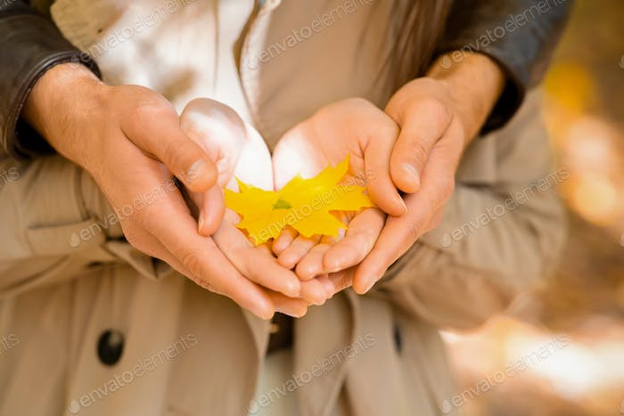Couple holding yellow maple leaf in palms