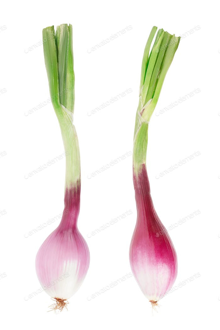 Red onions with stem, Tropea type, isolated on white, clipping p