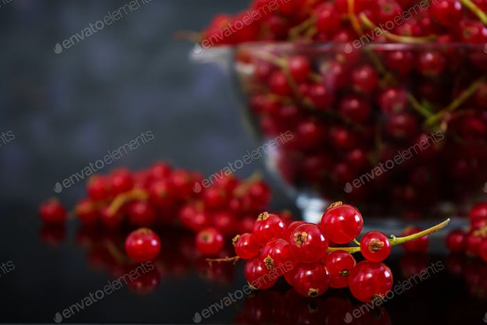Red currant on dark background