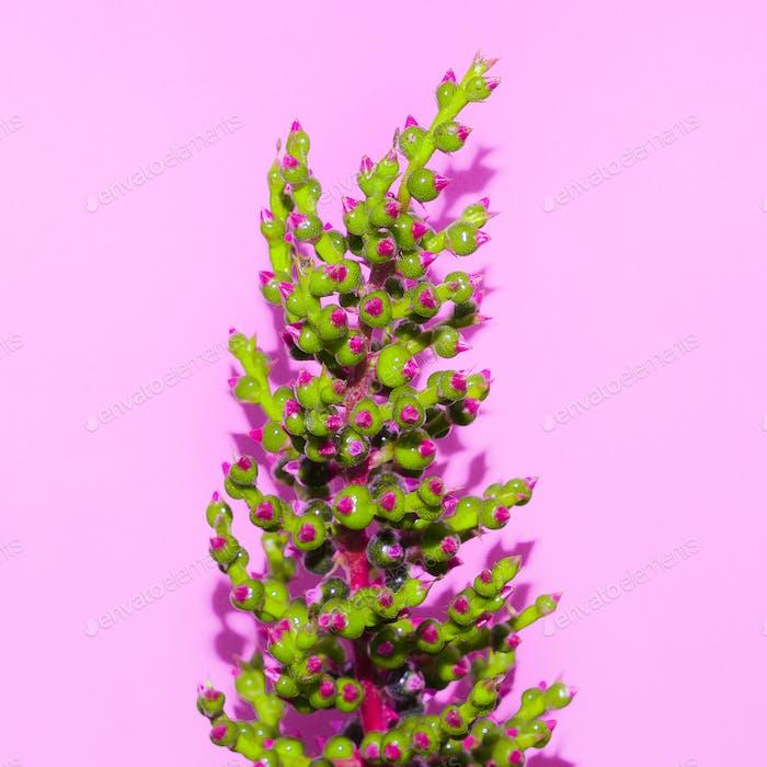 Minimal art. Exotic Plant on  pink. Stylish design  fashion