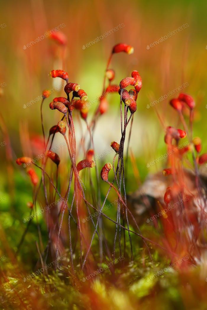 moss spores close up