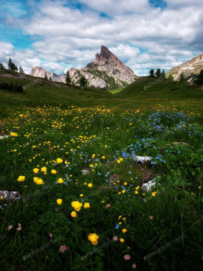 Early summer flowers in the mountains