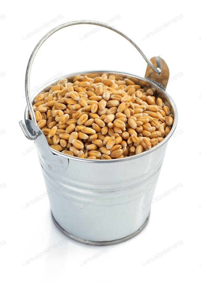 wheat grain in bucket isolated on white