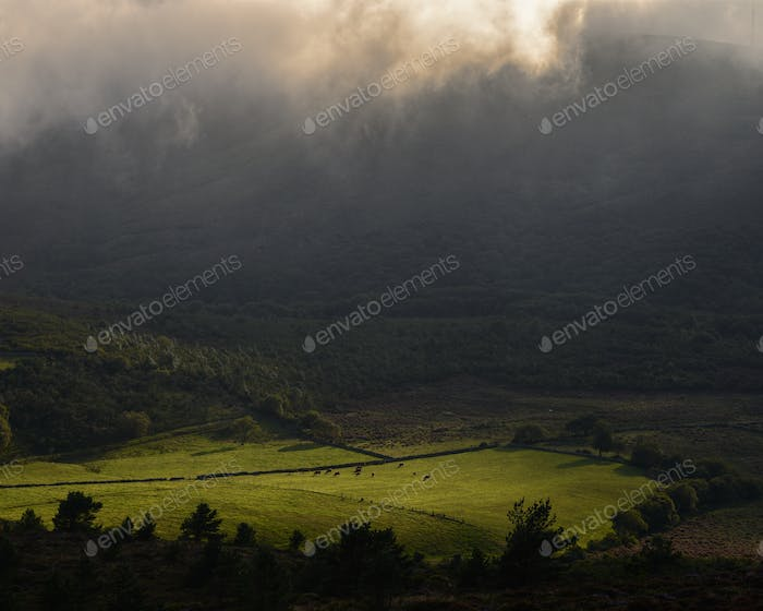 Meadow with a Moody Atmosphere of Lghts and Shadows