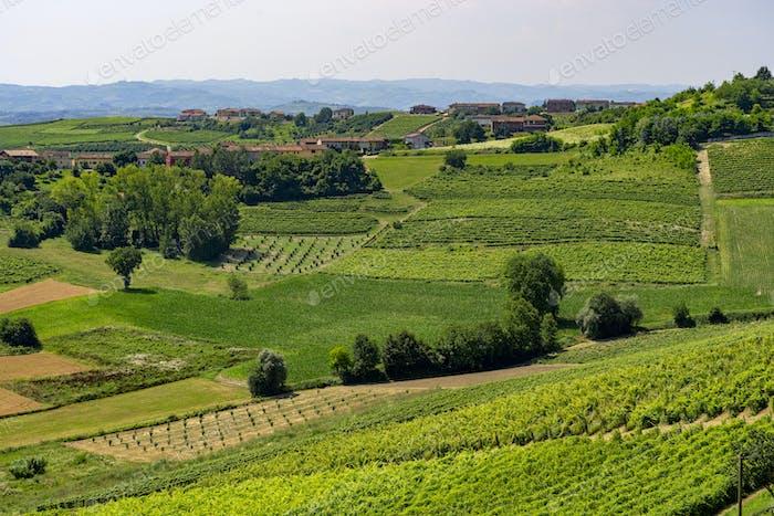 Road to Govone and San Martino Alfieri, Asti, in Monferrato