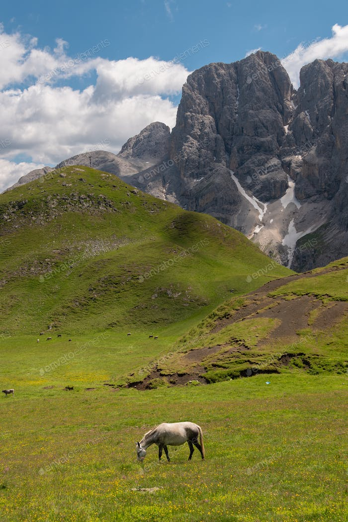 Horses on the pastures of the Dolomites mountains